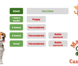 Protocolos de VACUNACION de perr@s y gat@s en Mascotes Castellbell centre veterinari S.L