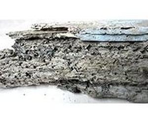 Tratamientos de la madera: SBA Control de Plagas