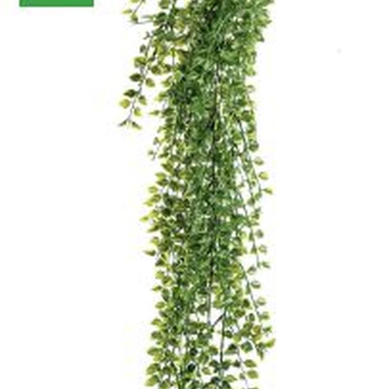 Planta colgante exterior 421432: ¿Qué hacemos? de Ches Pa, S.L.