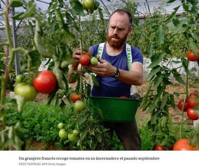 Del tomate al 'big data'