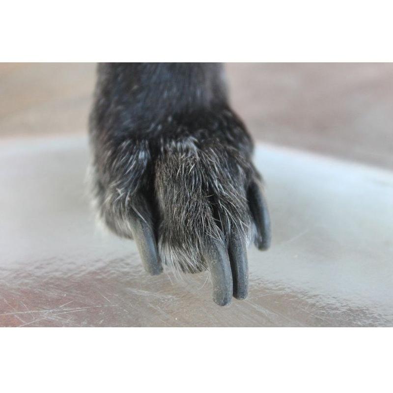 Corte de uñas: Servicios de Chic Doggy