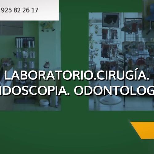 Veterinarios en Talavera de la Reina | Centro Médico Veterinario Pío 109