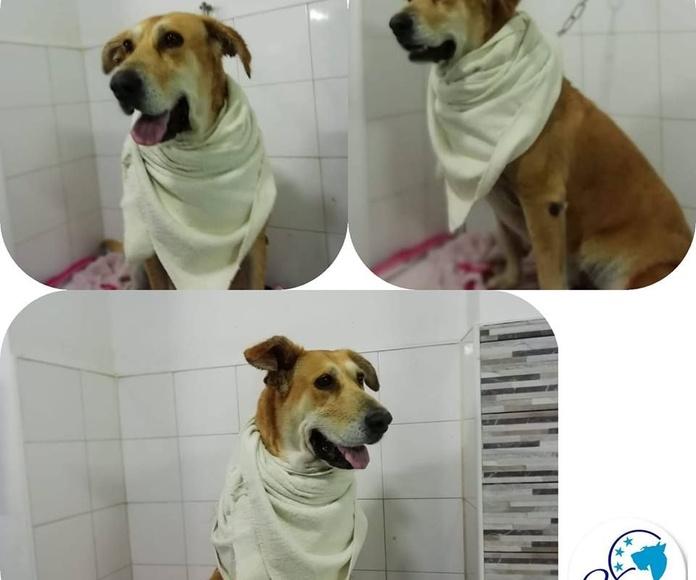 Accesorios para tu mascota: Servicios de Vetercan