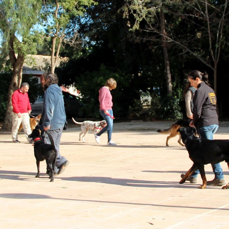 Adiestramiento y Modificación de conductas en perros: Servicios de Piolcan Adiestramiento Canino y Centro de formación