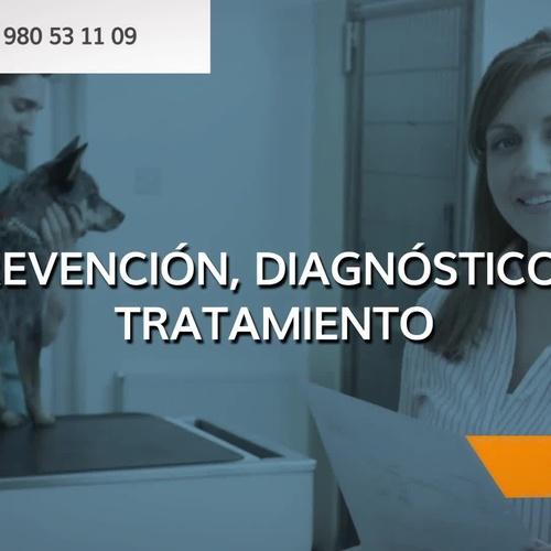 Veterinario de urgencias en Zamora | Clínica Veterinaria Servet