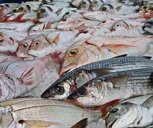 Pescados blancos