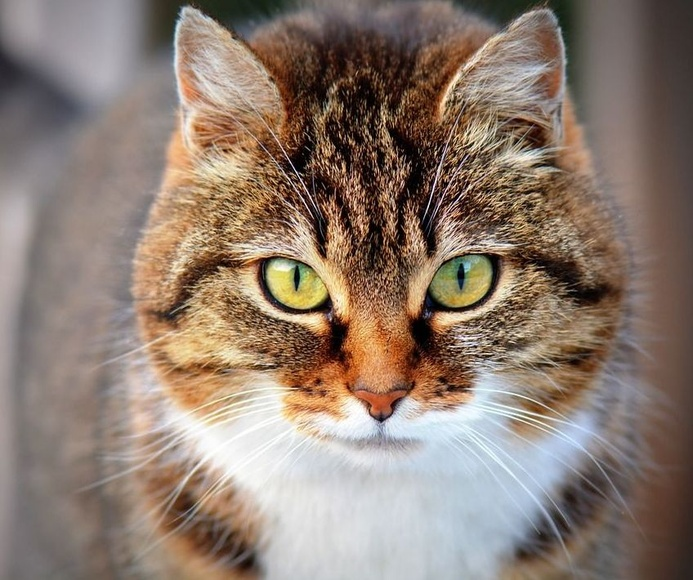 Planes de salud para tu gato