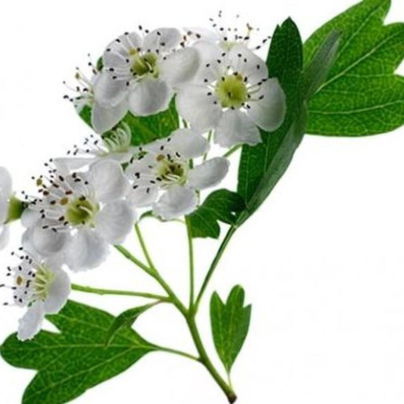 Plantas medicinales: Servicios y Productos de Farmacia Martínez Rementería