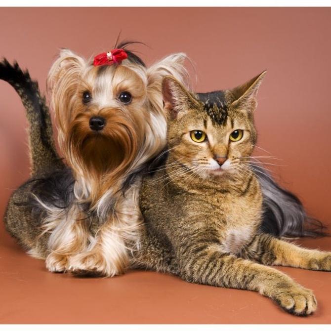 ¿Cómo beneficia a la piel la peluquería de mascotas?