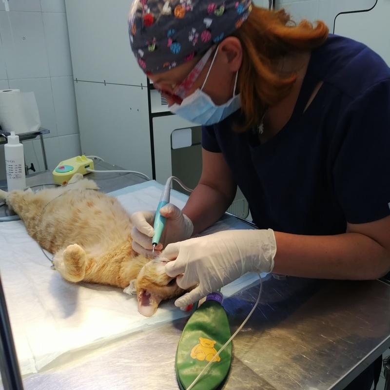 Cirugía: Servicios veterinarios de Clínica Veterinaria Leganés Norte