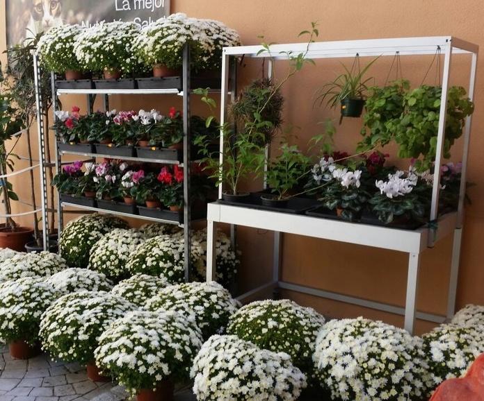 Plantas de interior y exterior: Productos y servicios de Agrícola Son Espanyolet
