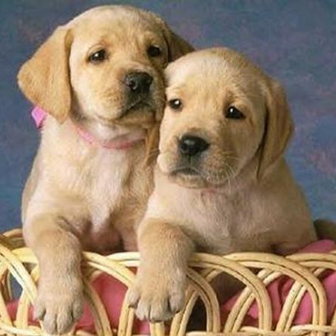 Accesorios básicos para perros