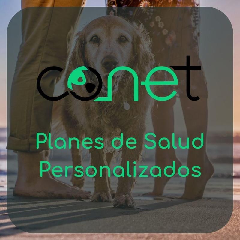 Plan de salud canina en Zaragoza