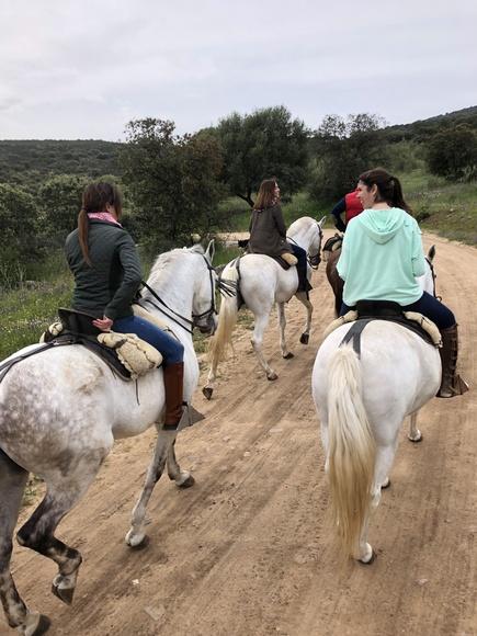 Alquiler de caballos: Servicios de Picadero Escuela Las Cruces