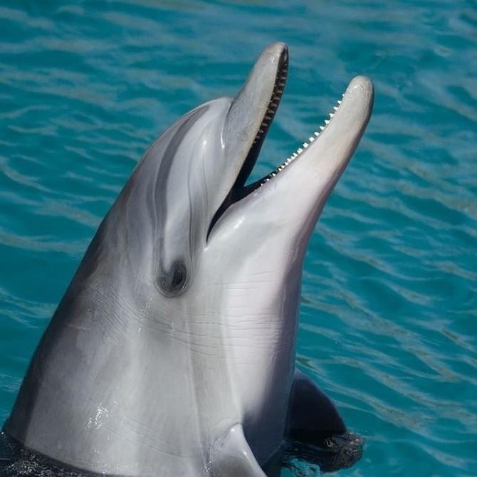 Algunos datos curiosos sobre los delfines