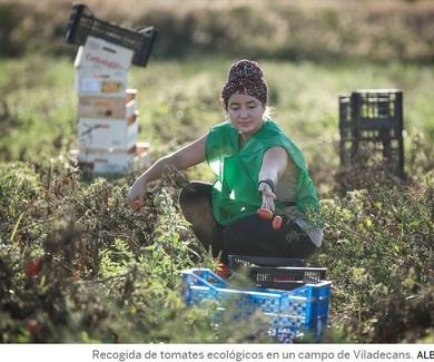 La extensión de los cultivos ecológicos crece un 8% en 2018