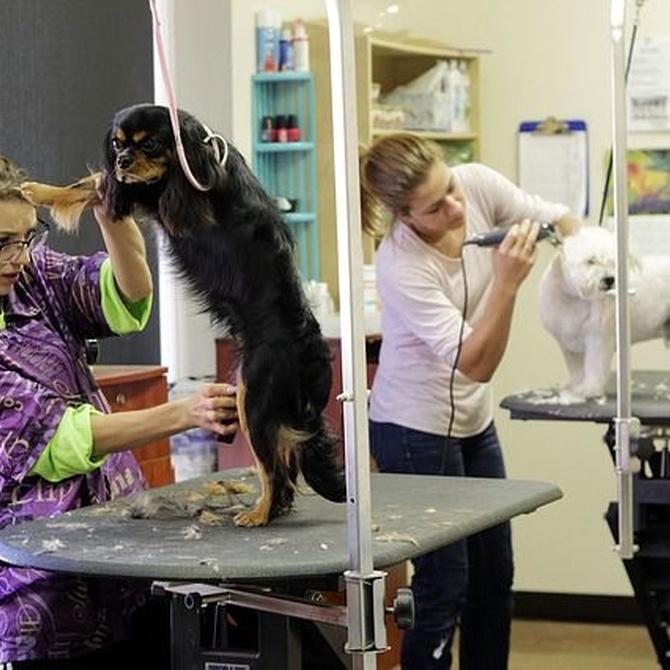 Cuidados de peluquería específicos para cada raza canina