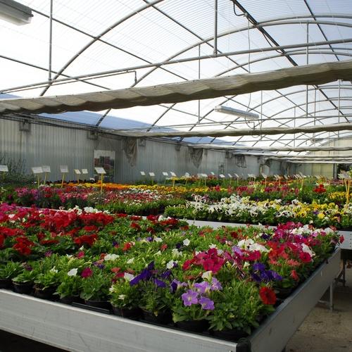 Empresas de jardinería en Boadilla del Monte