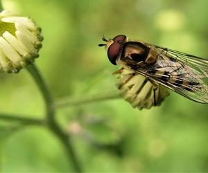 Cómo acabar con las moscas en Móstoles