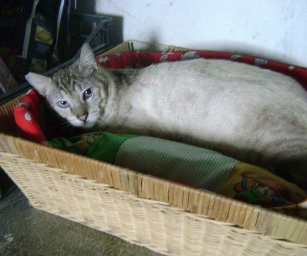 ¿Por qué mi gato no utiliza el arenero?
