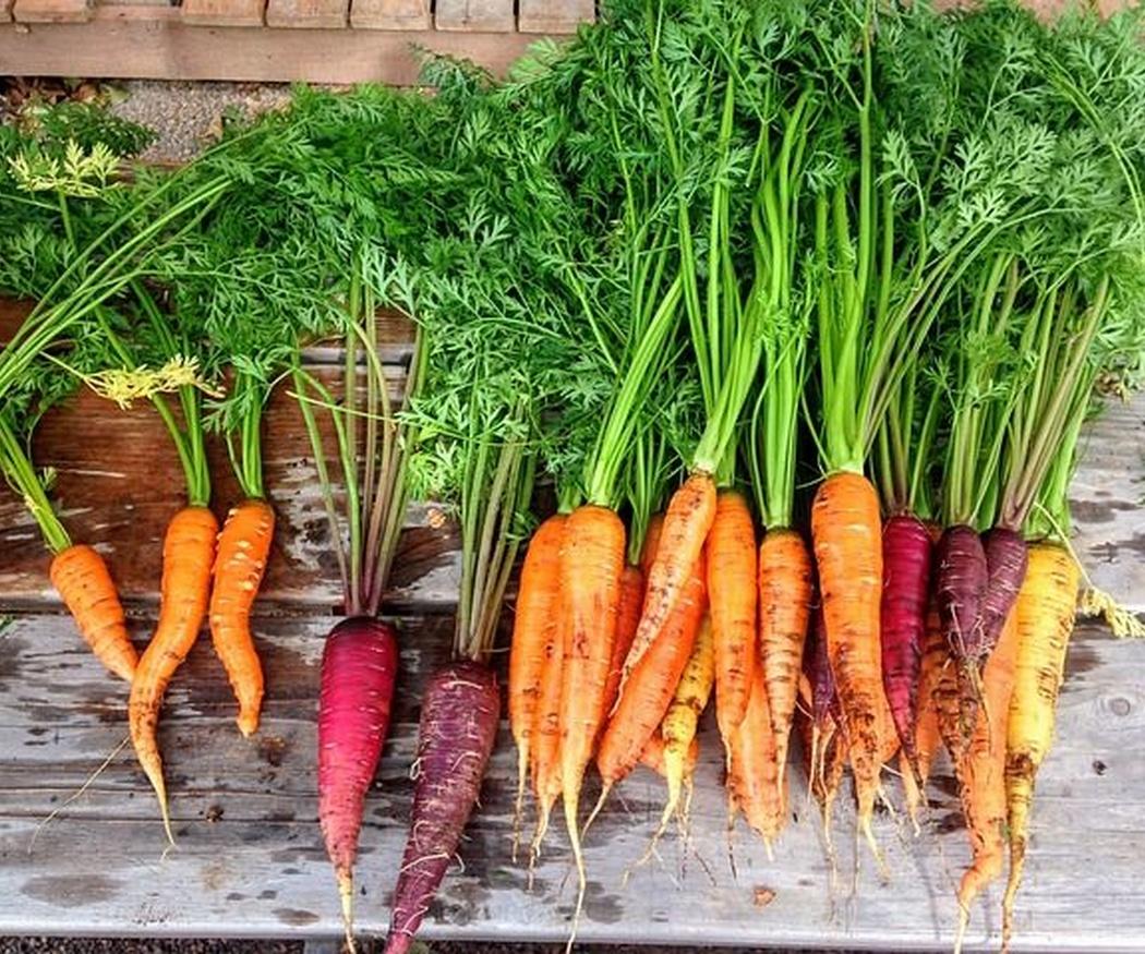 ¿Cuánto sabes acerca de la zanahoria?