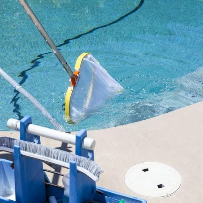 Las algas en la piscina