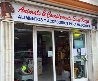 Diagnóstico: Tratamientos y servicios de Clínica Veterinaria Animals Vet