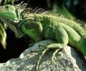 animales exóticos en Camarma de Esteruelas