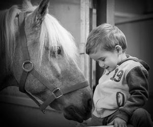 Todos los productos y servicios de Centro de equitación y equinoterapia: Centro de Equitación y Equinoterapia Biki Blasco