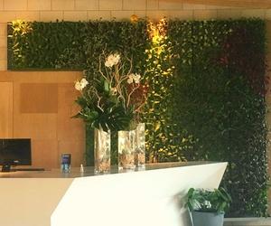 Jardines verticales de planta viva