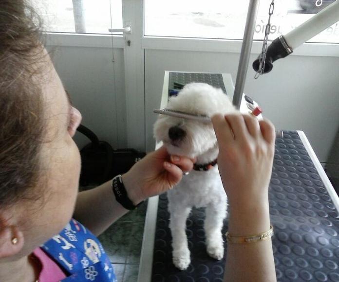Peluquería canina: Servicios de Estilisme Cani Bouboule