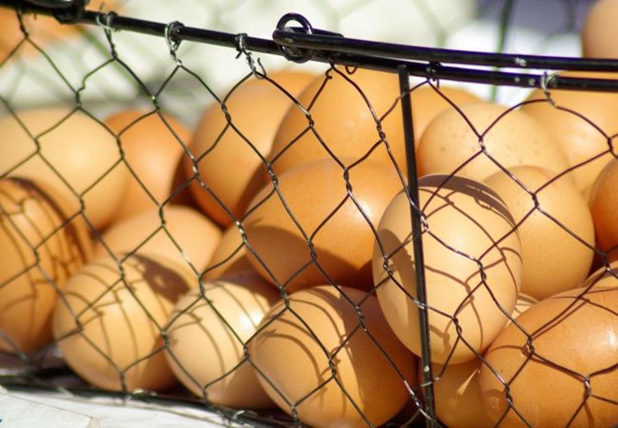 Algunos datos curiosos sobre los huevos