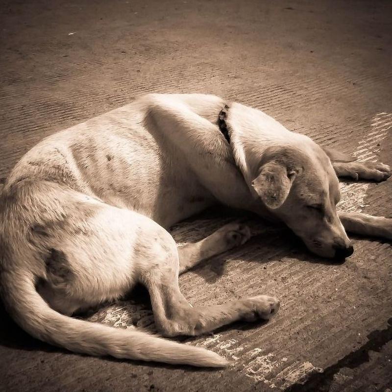 Anemia en perros y gatos:  de Clínica Veterinaria Rocafort