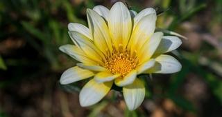 Las mejores flores para el verano