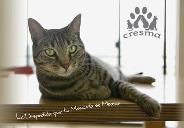 Recogida a domicilio o en la clínica veterinaria
