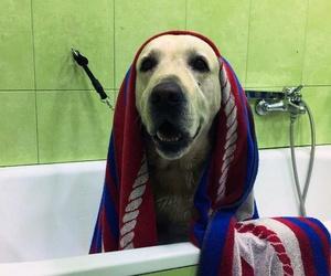 Nuestro servicio de peluquería canina