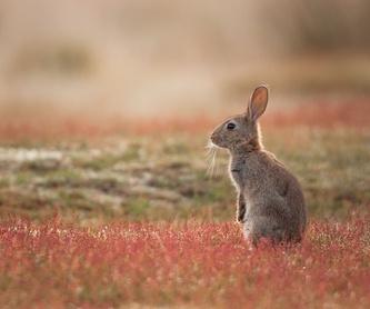 Venta de conejos: Control de Plagas de Sanfer