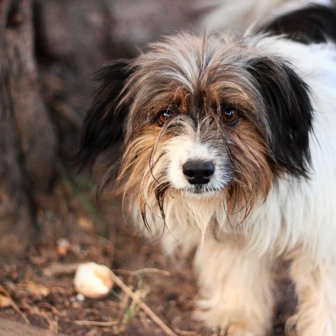 Problemas de descuidar el pelo de tu perro