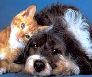 canina y felina