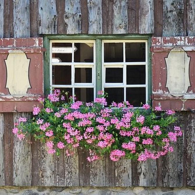 Pasos para proteger tus persianas de madera
