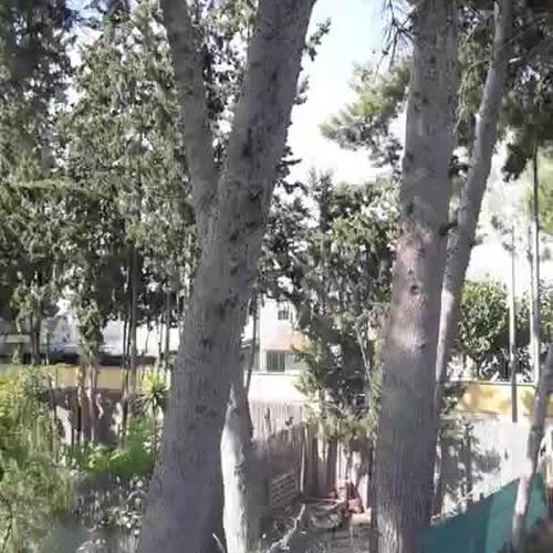 Poda en altura en Murcia | Mantenimiento Aspi