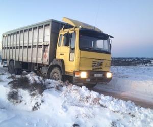 Transporte de cerdos al matadero en Huesca