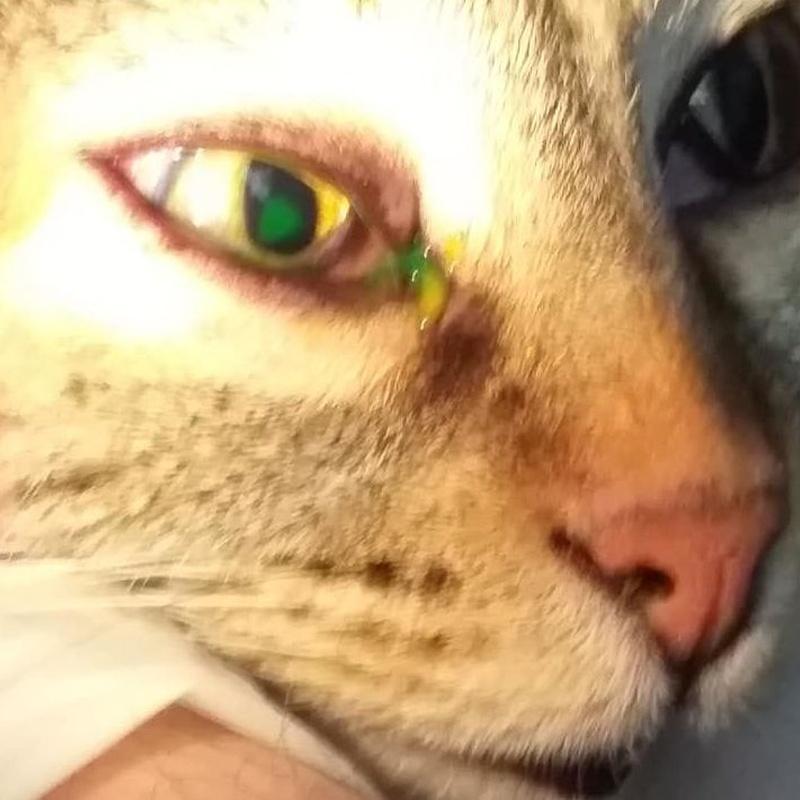 Úlcera en un ojo.