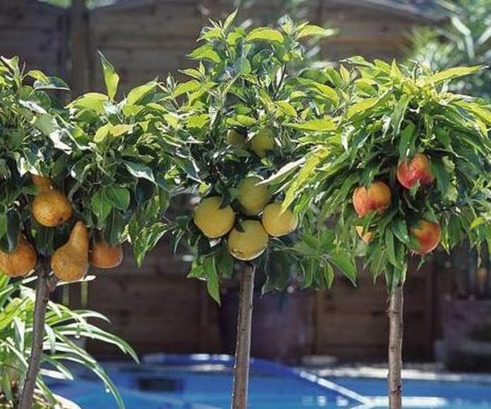 Árboles frutales: NUESTROS PRODUCTOS de Mofusa