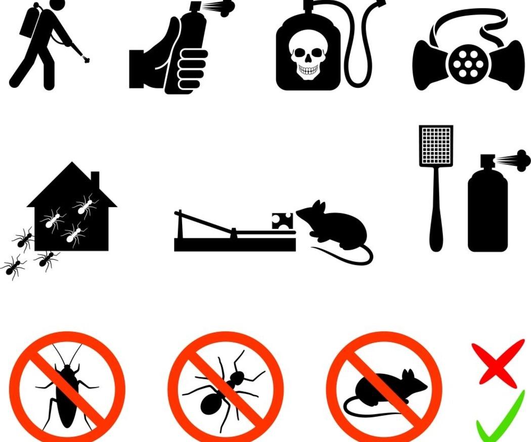 ¿Como acabar con las ratas en casa?