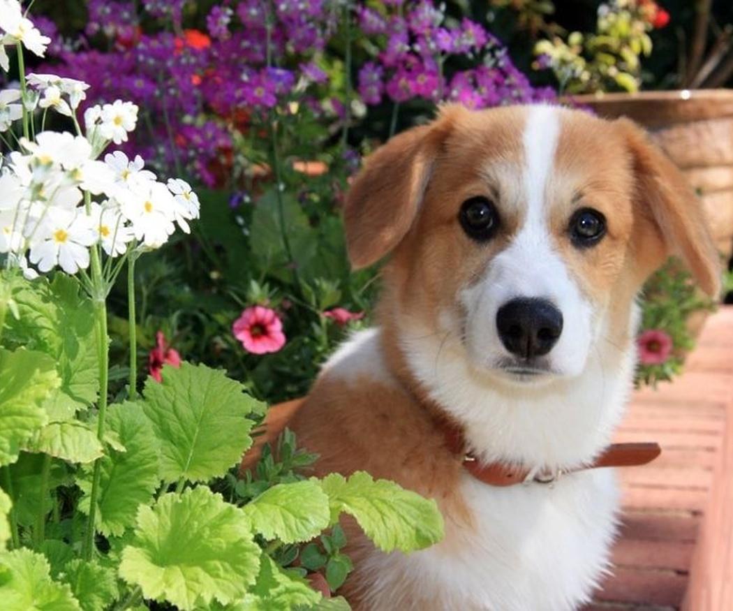 El desarrollo evolutivo de un cachorro: la fase de socialización