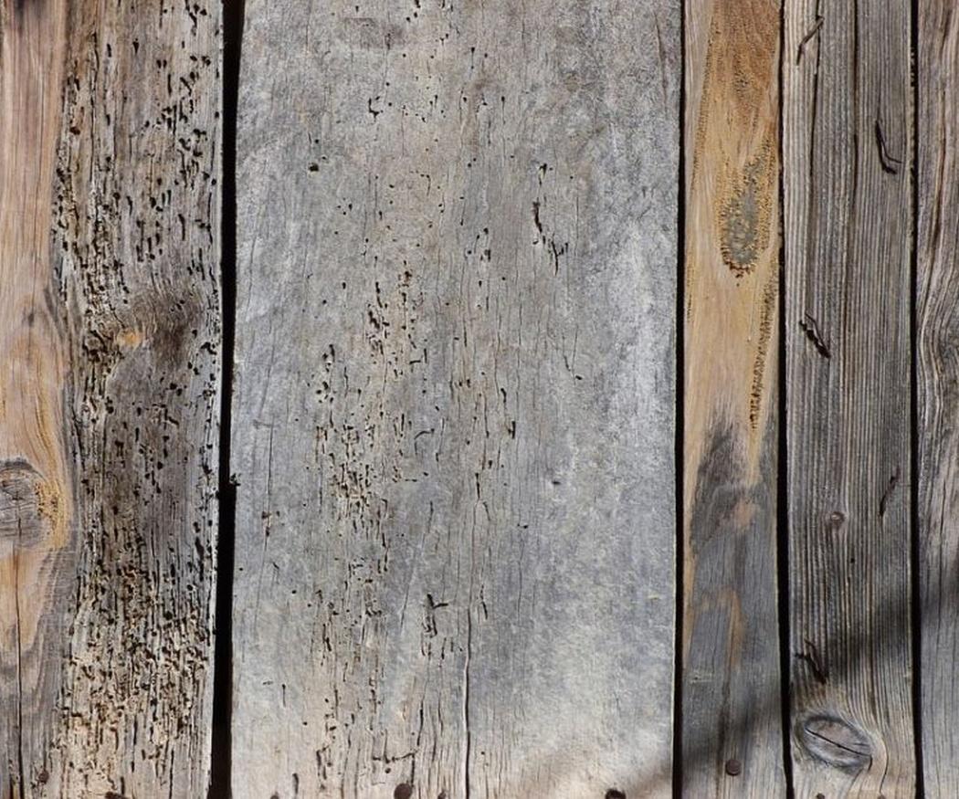 Diferencias entre carcoma y termitas