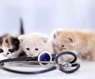 Medicina interna especializada: Servicios de Centro Veterinario Esteruelas