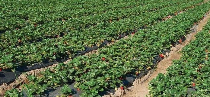 Cultivo ecológico: Productos y servicios de Viveros Hortplant, S. L.