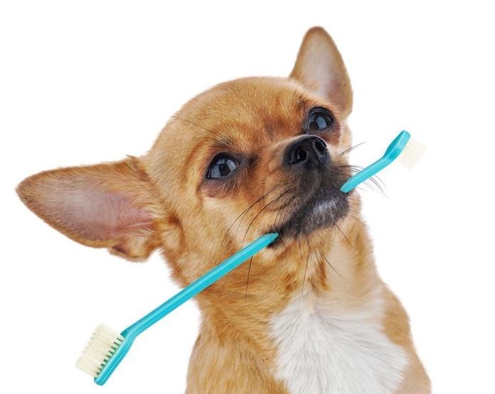 Cuidados dentales: Servicios de Les Fonts Veterinaria